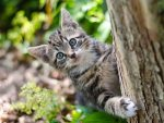Kitten climbing a tree as part of his morning routine