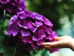 Offering Clients a bouguet of beautiful purple flowers will add to your relationship
